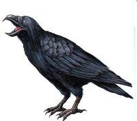 Art_crow