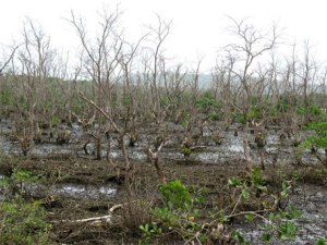 deadmangroves